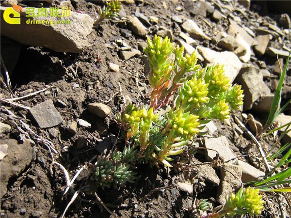 高山上的多肉植物9