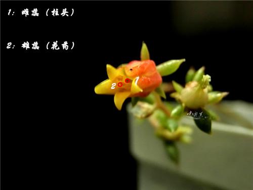 bozhong5