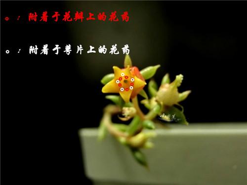 bozhong7