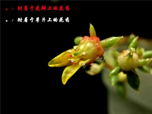 bozhong9