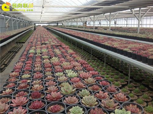 多肉植物大棚