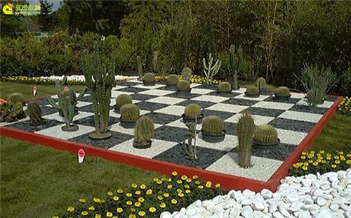多肉植物与创意国际象棋-12