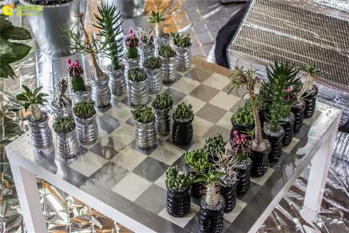 多肉植物与创意国际象棋-10
