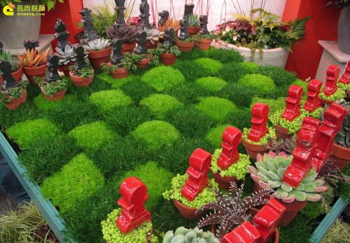 多肉植物与创意国际象棋-8