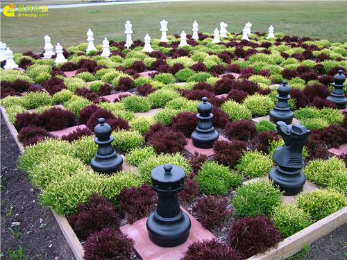 多肉植物与创意国际象棋-9