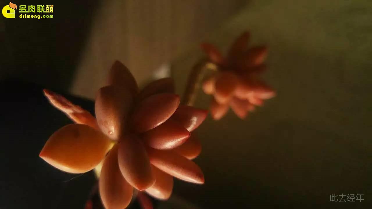 种了就有感情的多肉植物-21