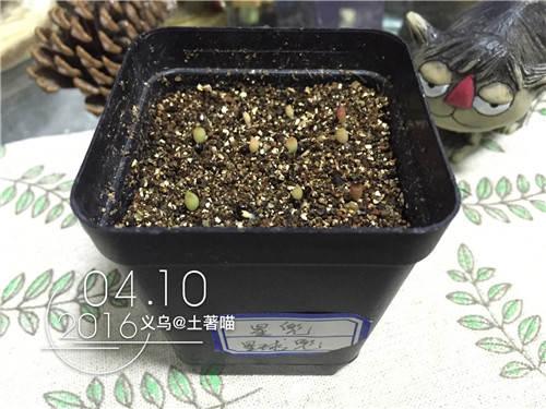 bozhong11