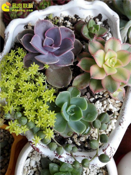 与多肉植物相伴 (3)
