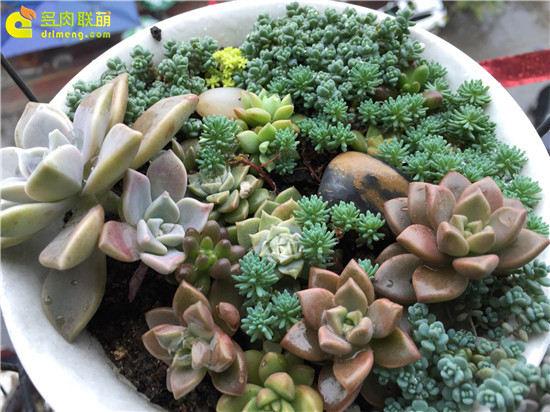 露养下自然生长的多肉植物(15)