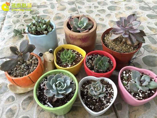 露养下自然生长的多肉植物(5)