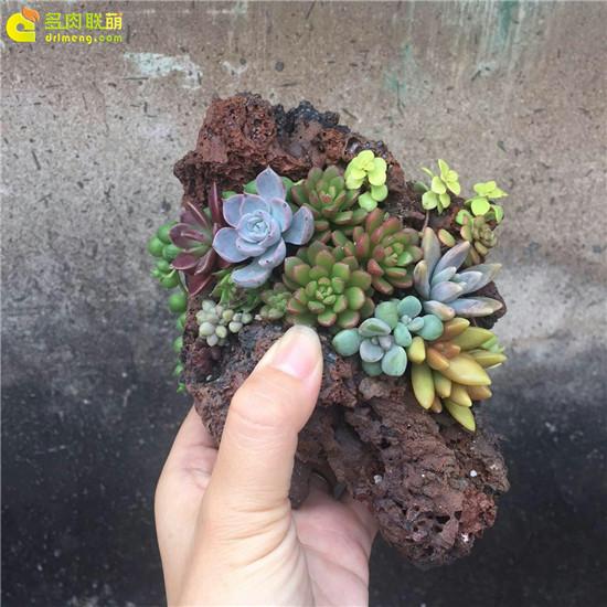 多肉植物枯木拼盘
