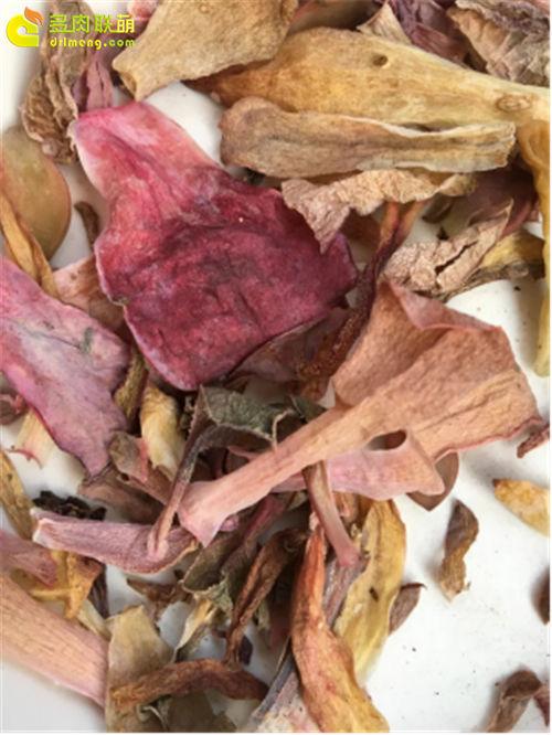 多肉植物自然消耗的叶片