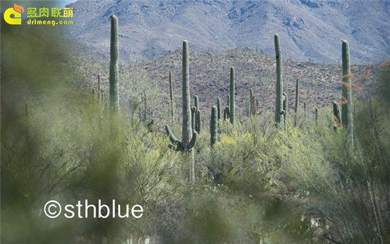 美国亚利桑那州多肉植物大棚-1