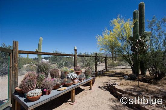 美国亚利桑那州多肉植物大棚-10