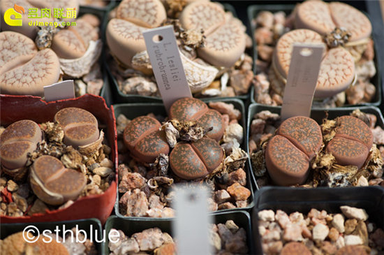 美国亚利桑那州多肉植物大棚-16
