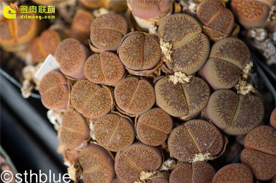 美国亚利桑那州多肉植物大棚-18