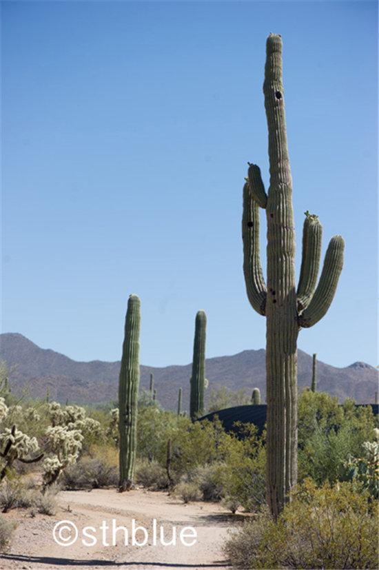 美国亚利桑那州多肉植物大棚-2