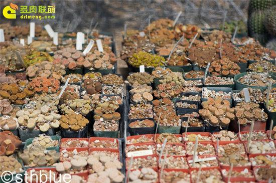 美国亚利桑那州多肉植物大棚-21