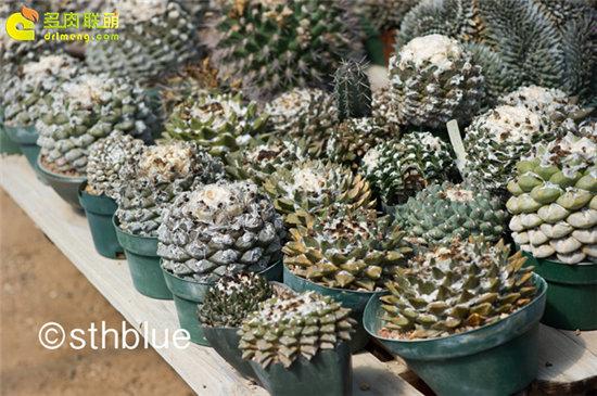 美国亚利桑那州多肉植物大棚-23