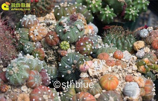 美国亚利桑那州多肉植物大棚-35