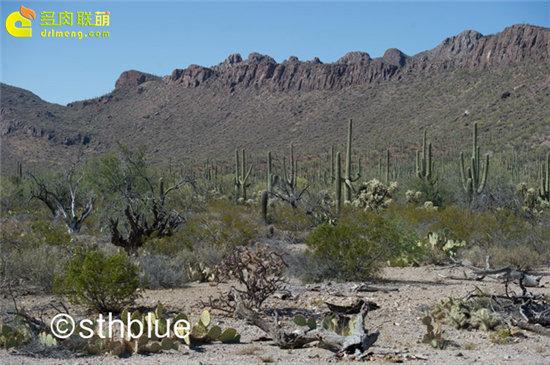 美国亚利桑那州多肉植物大棚-4