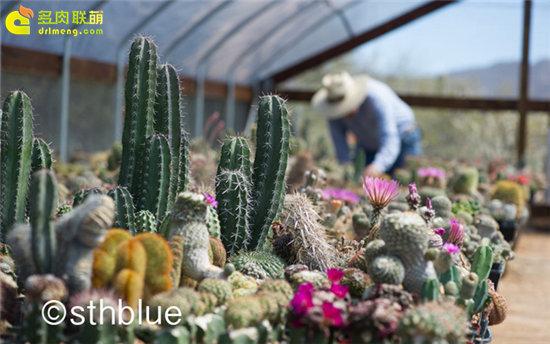 美国亚利桑那州多肉植物大棚-41