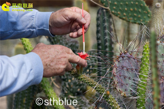 美国亚利桑那州多肉植物大棚-43