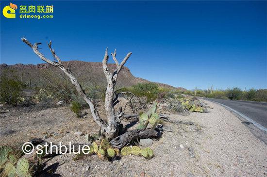 美国亚利桑那州多肉植物大棚-5