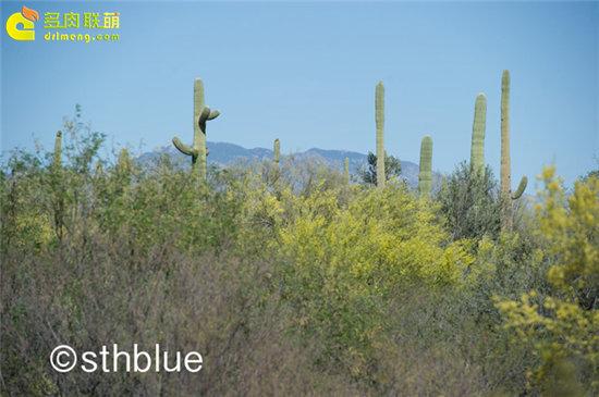 美国亚利桑那州多肉植物大棚-54