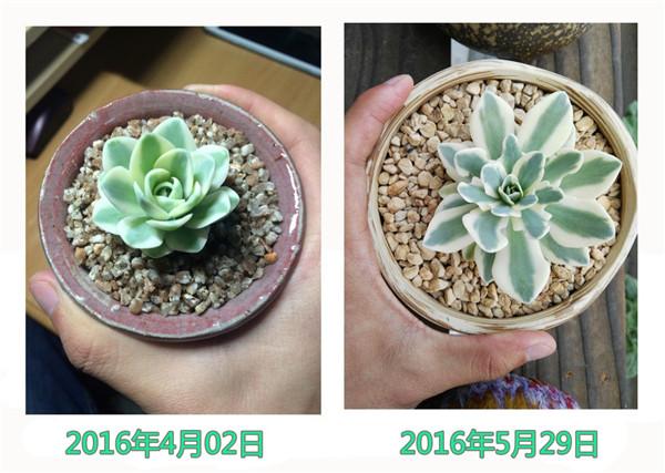 富士的成长变化