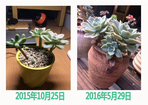 哈里沃森的成长变化
