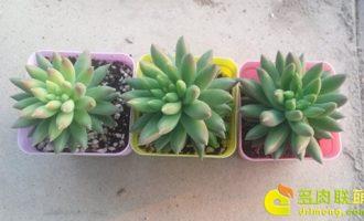 多肉植物需要施肥么?
