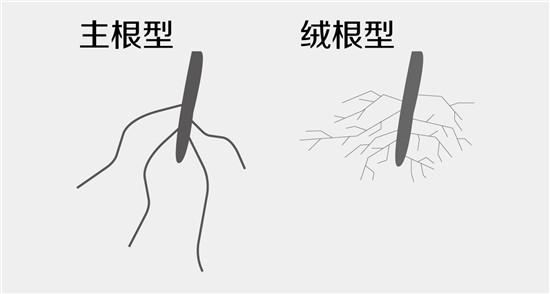 按习性分开种生石花-12