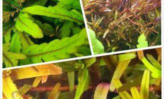从水草养护经验谈多肉养护