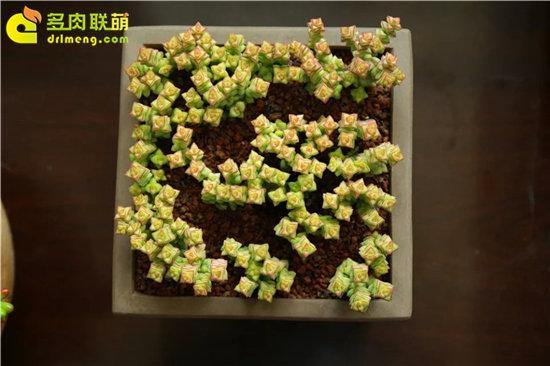 小米星的成长变化-4