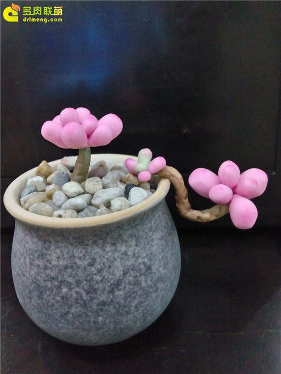 多肉植物软陶-1