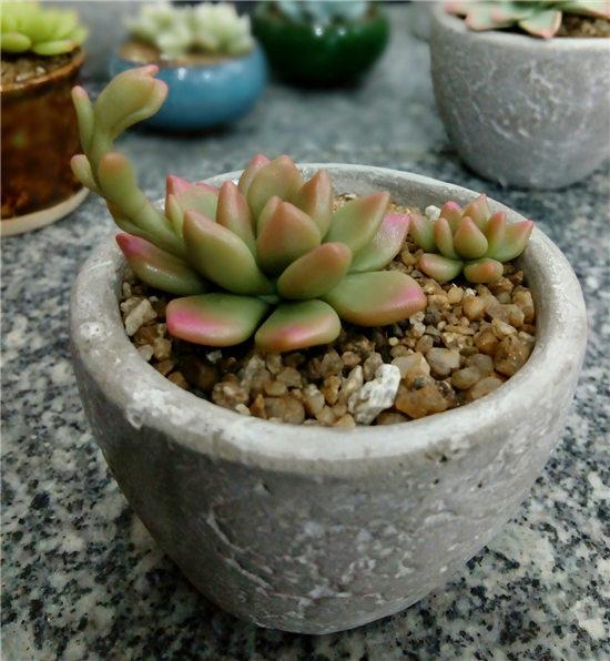 多肉植物软陶-17