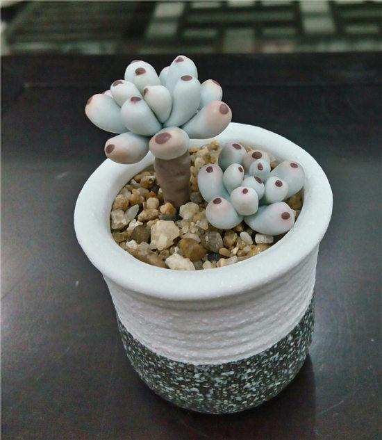 多肉植物软陶-18