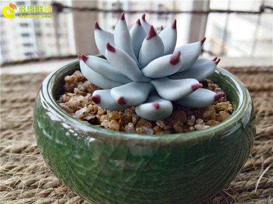 多肉植物软陶-21