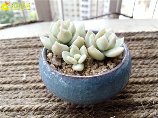 多肉植物软陶-24