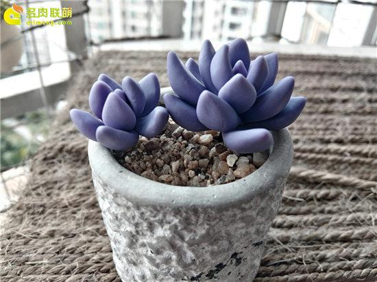 多肉植物软陶-26