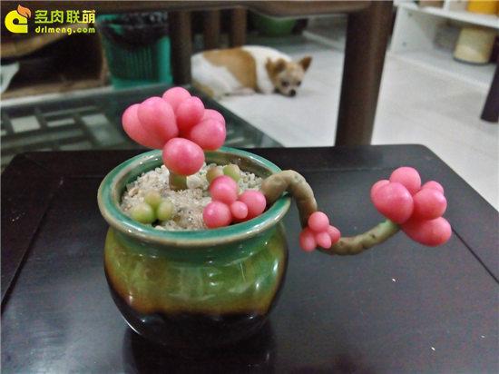 多肉植物软陶-3