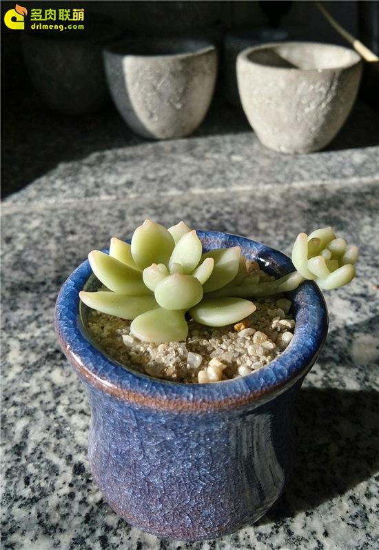 多肉植物软陶-5