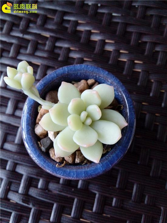 多肉植物软陶-6
