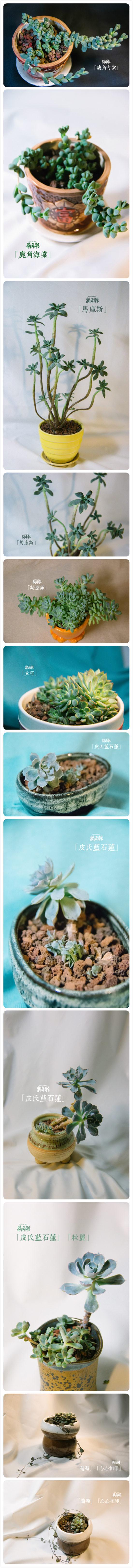 夏天多肉植物的真实样子-(5)