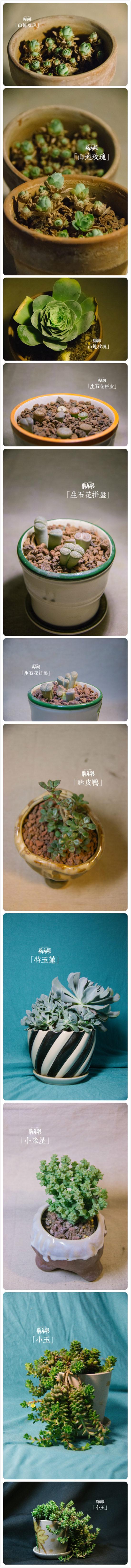 夏天多肉植物的真实样子-(7)