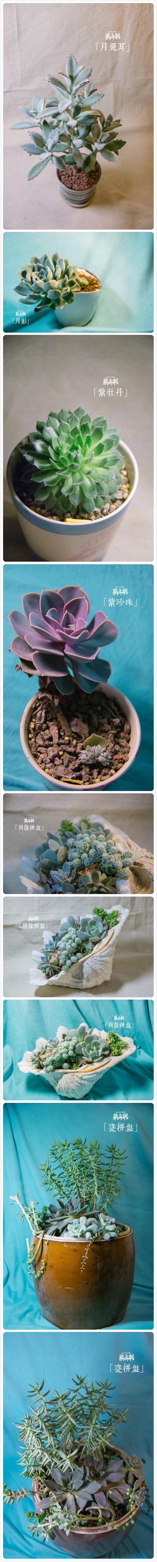 夏天多肉植物的真实样子-(9)