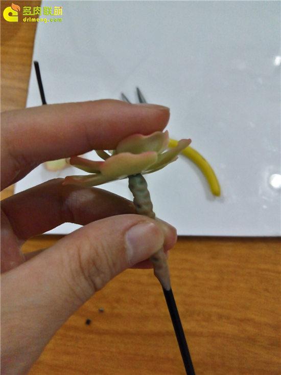 多肉植物软陶制作教程-24