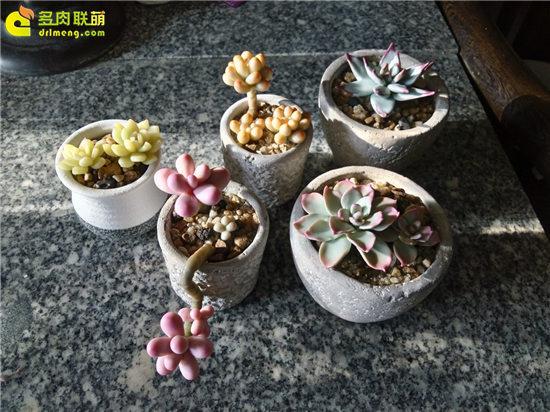 多肉植物软陶制作教程-29