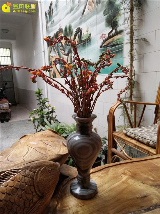 云南保山的多肉植物-25